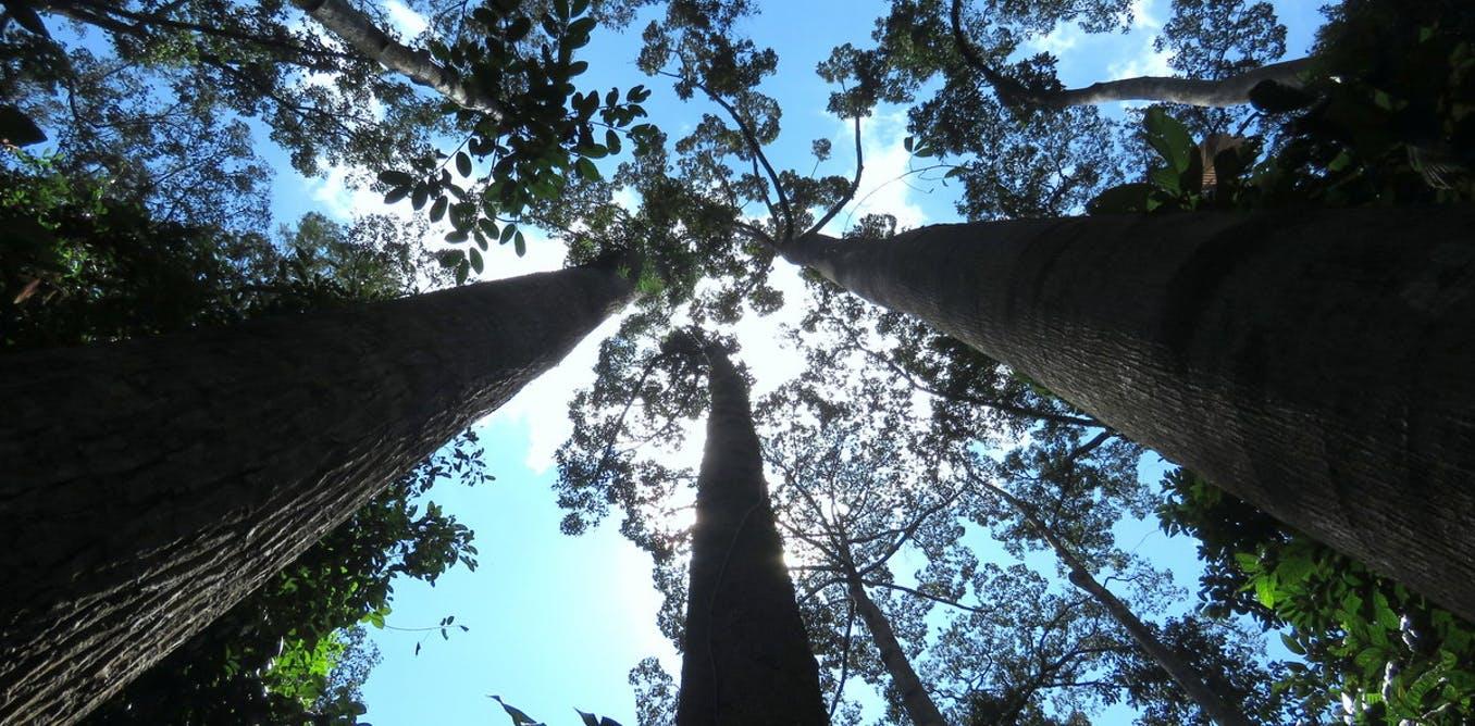 Deze 5 bomen sterven binnenkort uit